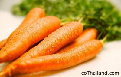 วิตามินเอ-แครอท-cothailand.com